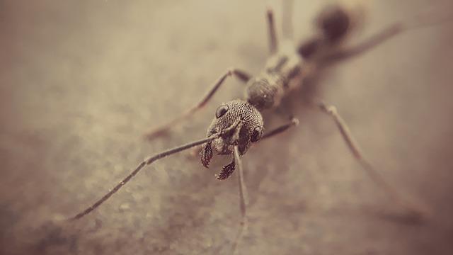 ant control north shore
