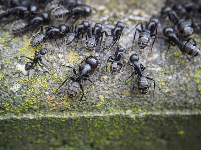 pest control company north shore