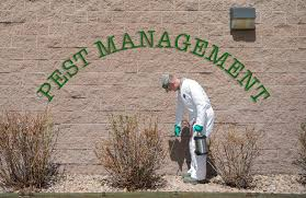 cheap pest control north shore