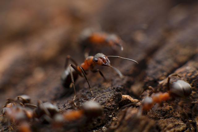 cockroach control north shore