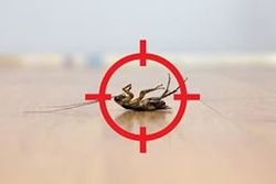 north shore pest control