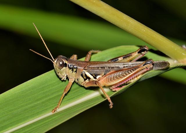 termite control auckland