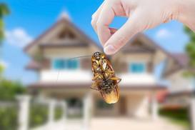 pest control north shore auckland