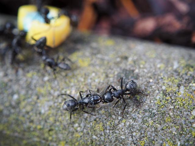 pest control service north shore