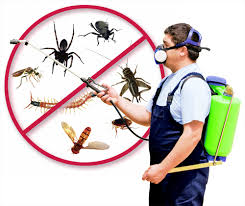 pest control services north shore